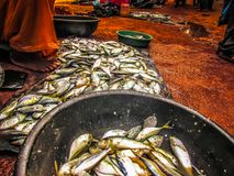 fishes in a market Royalty Free Stock Images