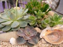 Closeup of different succulents waterless plants in glass flowerpot.  stock photos