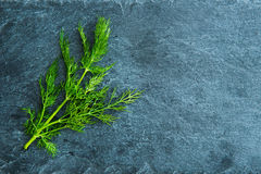 Closeup on dill on stone substrate Royalty Free Stock Photography