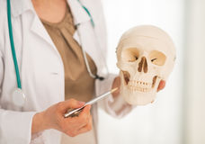 Closeup on doctor woman showing human skull Stock Photos