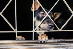 Closeup of a dog cage Stock Images