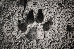 Closeup of dog footprint at the cracked ground. Animal footmark in dried land. Outdoor at the daytime. Nature background Stock Images