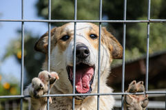 Closeup of a dog looking through the bars of a fance Royalty Free Stock Photography