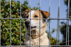 Closeup of a dog looking through the bars of a fance Royalty Free Stock Photo