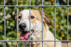Closeup of a dog looking through the bars of a fance Royalty Free Stock Images