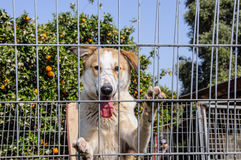 Closeup of a dog looking through the bars of a fance Stock Image