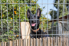 Closeup of a dog looking through the bars of a fance Stock Images