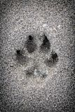 Paw print in sand. Closeup of dog paw print in sand royalty free stock image