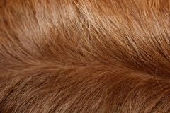 Closeup of a dogs fur Stock Photo