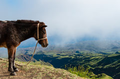 Closeup Donkey standing sideways on mountain above Royalty Free Stock Photography