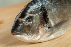 Closeup of dorado fish head Royalty Free Stock Photo