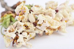 Closeup of dried cherry flowers Stock Photos