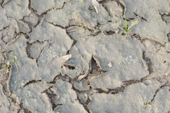 Closeup of dried and crackled ground texture with shoot green Royalty Free Stock Images