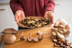 Closeup on dried mushrooms Stock Photo