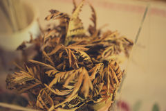 Closeup dried plant. Royalty Free Stock Images