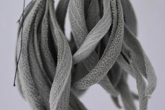 Closeup of dried sage Royalty Free Stock Photography