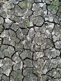 Closeup of drought land Stock Photos