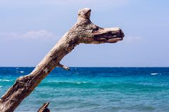 Branch in front of the sea royalty free stock photos