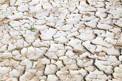 Closeup of dry cracked earth background, clay desert texture Royalty Free Stock Photography