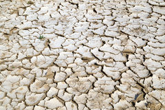 Closeup of dry cracked earth background, clay desert texture Stock Images