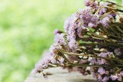 Closeup of dry flowers composition Royalty Free Stock Photos