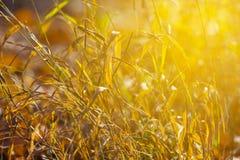 Closeup dry grass Stock Images