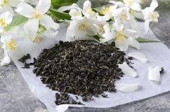 Closeup of dry green tea and fresh jasmine flowers on the grey surface.Healthy and tasty tea with flavor. Dry leaves of green tea on the paper and jasmine royalty free stock photo