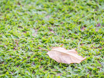 Closeup of  dry leaf on green grass.  Royalty Free Stock Photography
