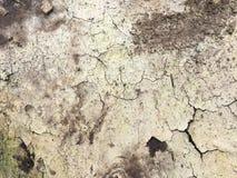 Closeup of dry soil Royalty Free Stock Image