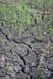 Closeup of dry soil Royalty Free Stock Image