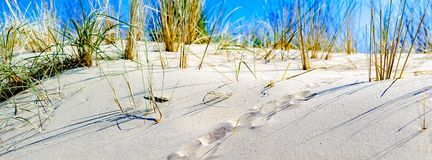 Closeup of a dune lit by sunlight with undefined animal footprints in the sand. Copy space. 851x312 banner. Summer concept. royalty free stock photo