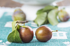 Closeup from ecological plums Royalty Free Stock Image