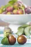 Closeup from ecological plums Stock Photos