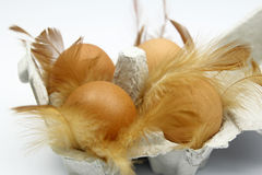 Closeup of egg box and feathers Stock Photo