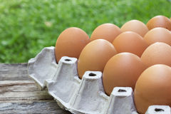 Closeup egg in paper tray. Stock Images