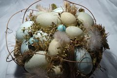 Closeup of eggs in natural vine basket. Eggs are nestled in nature-inspired basket with grass and feathers for spring or Easter home decor Stock Images