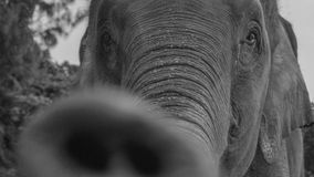 Closeup of an elephant Royalty Free Stock Photography