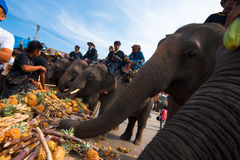 Closeup Elephant Breakfast Feeding Royalty Free Stock Images