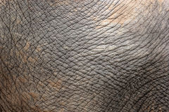 Closeup of elephant skin Stock Image