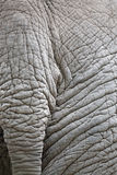 Closeup of elephant skin Stock Photos