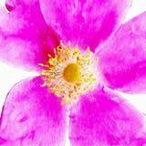 Closeup enkla rosa Rose Fine Art vektor illustrationer