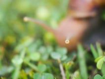 Closeup ett gulligt snigelöga Royaltyfri Fotografi