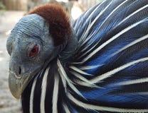 Closeup of exotic, dangerous looking bird. stock photo