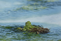 Closeup of exposed mosses and seaweeds in a sea coast Stock Photos