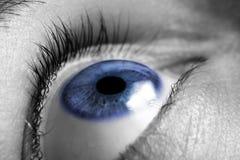 Closeup of an eye. Closeup of a bright blue eye Stock Photography