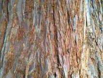 Closeup för bakgrundsträdskäll - kalifornisk redwoodträdsequoia Sempervirens Royaltyfri Fotografi