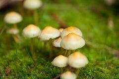 Closeup för makro för brun champinjonhöst utomhus- arkivfoton