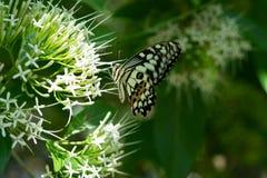 Closeup för monarkfjäril arkivbild