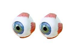 Closeup för oftalmologioculusprövkopia på vit bakgrund Fotografering för Bildbyråer
