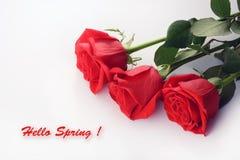 Closeup för röda rosor härlig bukett Hello fjädrar kortet Arkivbilder